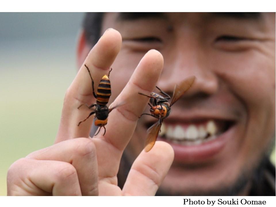 嫌い スズメバチ な 匂い が スズメバチの天敵は意外に多い。駆除に利用できる天敵はいるのか|生活110番ニュース